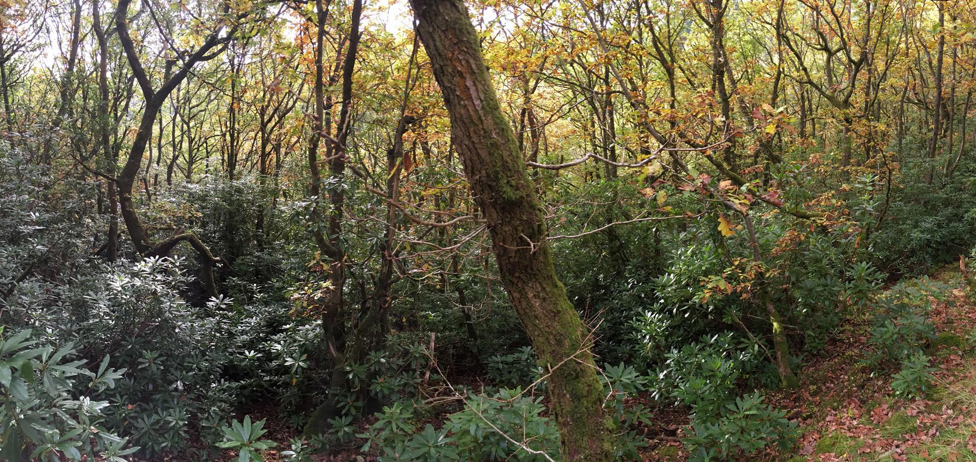 counselling_psychotherapy_IanBurtontherapy_oak_woodland